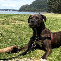SPONSOR A DOG - Email Sponsor@chaineddog.org.nz to discuss how to do make regular payments and sponsor a dog